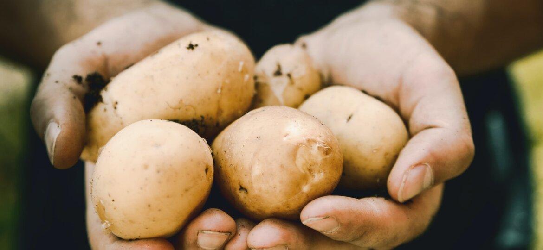 krumpir 2